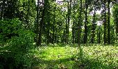 Randonnée Marche COYOLLES - en forêt de Retz_78_les rayons du Rond Capitaine - Photo 20