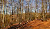 Trail Walk PIERREFONDS - en forêt de Compiègne_24_Tournantes sur le Voliard et sur la Fortelle_chaussée Brunehaut - Photo 46