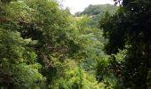 Trail Walk RIVIERE-SALEE - JOUBADIÈRE - MORNE CONSTANT - PAGERIE - Photo 39