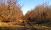 Trail Walk PIERREFONDS - en forêt de Compiègne_24_Tournantes sur le Voliard et sur la Fortelle_chaussée Brunehaut - Photo 78
