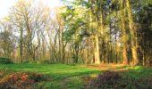 Randonnée A pied VILLERS-COTTERETS - le GR11A  dans la Forêt de Retz  - Photo 119