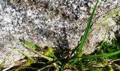 Trail Walk ARAGNOUET - les lacs - Photo 9