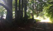 Randonnée Marche Sainte-Ode - Transardenaise étape 2 - Photo 1