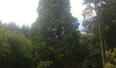 Randonnée Marche MUHLBACH-SUR-BRUCHE - Le Jardin des Fées par la cascade de Soulzbach - Photo 9