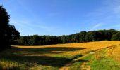 Randonnée Marche HARAMONT - en forêt de Retz_79_08_2019_vers Taillefontaine et Retheuil par les lisières - Photo 33