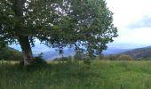 Randonnée Marche SENTHEIM - Sentheim Rossberg - Photo 12