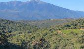 Randonnée Marche BELESTA - 20200907 tour depuis Bélesta - Photo 14