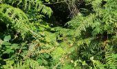 Randonnée Marche LOCMELAR - ballade 270719 - Photo 26