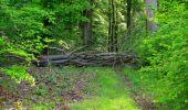 Randonnée Marche COYOLLES - en forêt de Retz_78_les rayons du Rond Capitaine - Photo 81