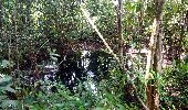 Trail Walk RIVIERE-SALEE - JOUBADIÈRE - MORNE CONSTANT - PAGERIE - Photo 22