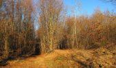 Trail Walk PIERREFONDS - en forêt de Compiègne_24_Tournantes sur le Voliard et sur la Fortelle_chaussée Brunehaut - Photo 116