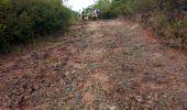 Trail Walk RIVIERE-SALEE - JOUBADIÈRE - MORNE CONSTANT - PAGERIE - Photo 46