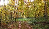 Randonnée Marche SAINT-JEAN-AUX-BOIS - en forêt de Compiègne_32_11_2019_les Tournantes de la Muette et sous la Tête Saint-Jean - Photo 120