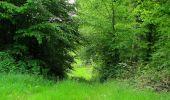 Randonnée Marche COYOLLES - en forêt de Retz_78_les rayons du Rond Capitaine - Photo 3