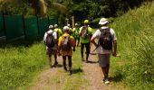Trail Walk RIVIERE-SALEE - JOUBADIÈRE - MORNE CONSTANT - PAGERIE - Photo 4