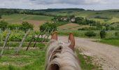 Trail Horseback riding MOLLKIRCH - 2019-05-26 Balade Fête des mères - Photo 3