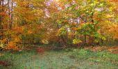 Randonnée Marche SAINT-JEAN-AUX-BOIS - en forêt de Compiègne_32_11_2019_les Tournantes de la Muette et sous la Tête Saint-Jean - Photo 135