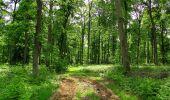 Randonnée Marche COYOLLES - en forêt de Retz_78_les rayons du Rond Capitaine - Photo 17