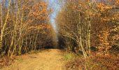 Trail Walk RETHEUIL - en forêt de Retz_76_dans les forêts de Retz et de Compiègne - Photo 7