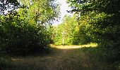 Randonnée Marche LACROIX-SAINT-OUEN - en forêt de Compiègne_35_la Croix Saint-Sauveur_le Ru du Goderu - Photo 58