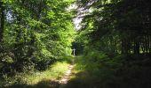 Randonnée Marche SAINT-JEAN-AUX-BOIS - en forêt de Compiègne_2_ruines gallo-romaines de Champlieu_les Petits Monts - Photo 129