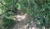 Randonnée Marche Yvoir - Durnal / 2020-07-19 - Photo 18