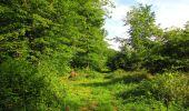 Randonnée Marche COYOLLES - en forêt de Retz_78_les rayons du Rond Capitaine - Photo 85