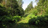 Randonnée Marche LACROIX-SAINT-OUEN - en forêt de Compiègne_35_la Croix Saint-Sauveur_le Ru du Goderu - Photo 13