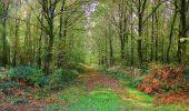 Randonnée A pied VILLERS-COTTERETS - le GR11A  dans la Forêt de Retz  - Photo 155