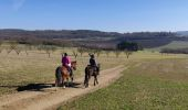 Trail Horseback riding GRESSWILLER - 2019-02-17 Balade Picnic Dinsheim - Photo 5