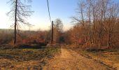 Trail Walk RETHEUIL - en forêt de Retz_76_dans les forêts de Retz et de Compiègne - Photo 8