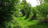 Randonnée Marche COYOLLES - en forêt de Retz_78_les rayons du Rond Capitaine - Photo 137