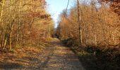 Trail Walk RETHEUIL - en forêt de Retz_76_dans les forêts de Retz et de Compiègne - Photo 6