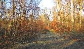 Trail Walk SAINT-JEAN-AUX-BOIS - en forêt de Compiègne_33_12_2019_les Tournantes de l'étang Saint-Jean et des Prés Saint-Jean - Photo 56