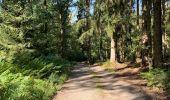 Randonnée Marche Saint-Hubert - Mirwart redu  - Photo 5