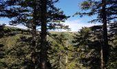 Trail Walk METZERAL - Steinabruck - Le Hohneck et ses 3 lacs Fischboedle, Altenweiher et Schiessrothried - Photo 13