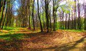 Randonnée A pied VILLERS-COTTERETS - le GR11A  dans la Forêt de Retz  - Photo 54
