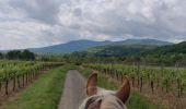 Trail Horseback riding MOLLKIRCH - 2019-05-26 Balade Fête des mères - Photo 2