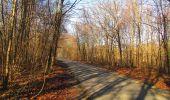 Trail On foot VIEUX-MOULIN - en forêt de Compiègne_23_la Grotte des Ramoneurs_le Mont Berny - Photo 88
