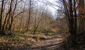 Trail Walk PIERREFONDS - en forêt de Compiègne_24_Tournantes sur le Voliard et sur la Fortelle_chaussée Brunehaut - Photo 71
