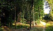 Trail Walk DAMPLEUX - en forêt de Retz_80_sur la Route Tortue et la Route Droite - Photo 12