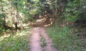 Trail Walk SENTHEIM - Marcher au marché - Photo 9