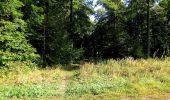 Trail Walk DAMPLEUX - en forêt de Retz_80_sur la Route Tortue et la Route Droite - Photo 154