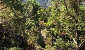 Trail Walk CALENZANA - Boucle de ficaghijola - Photo 3