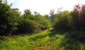 Trail Walk COYOLLES - en forêt de Retz_78_les rayons du Rond Capitaine - Photo 132
