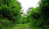 Randonnée Marche COYOLLES - en forêt de Retz_78_les rayons du Rond Capitaine - Photo 4