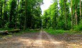 Trail Walk COYOLLES - en forêt de Retz_78_les rayons du Rond Capitaine - Photo 53