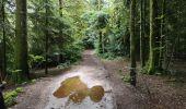 Trail Walk ECROMAGNY - Milles Étangs 18.06.2020 - Photo 2