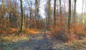 Trail Walk SAINT-JEAN-AUX-BOIS - en forêt de Compiègne_33_12_2019_les Tournantes de l'étang Saint-Jean et des Prés Saint-Jean - Photo 181