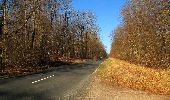 Trail Walk RETHEUIL - en forêt de Retz_76_dans les forêts de Retz et de Compiègne - Photo 86